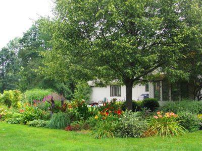 Фото лилейников в деревенском саду