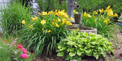 Лилейники в дизайне сада возле колонки с водой